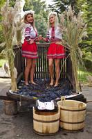 Winemaking by nicubunu