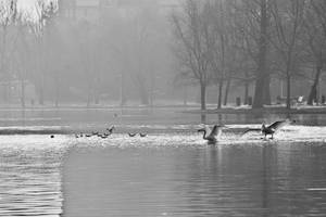 Water ballet by nicubunu
