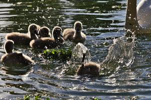 Splash by nicubunu