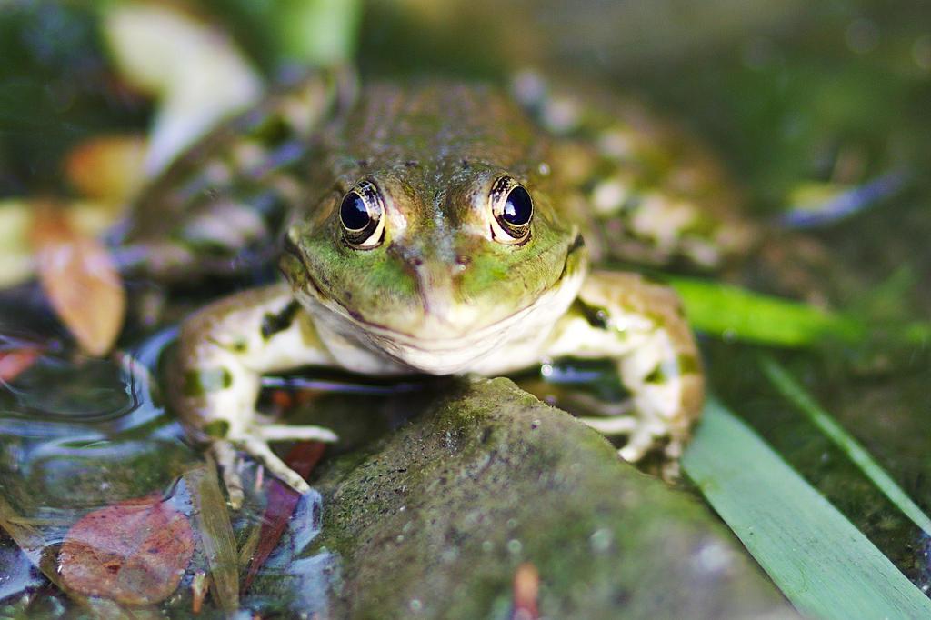 Froggy Hugs by nicubunu