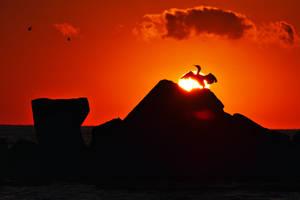 Cormorant in the sun