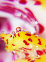 Orchid Droplets by onixaStock