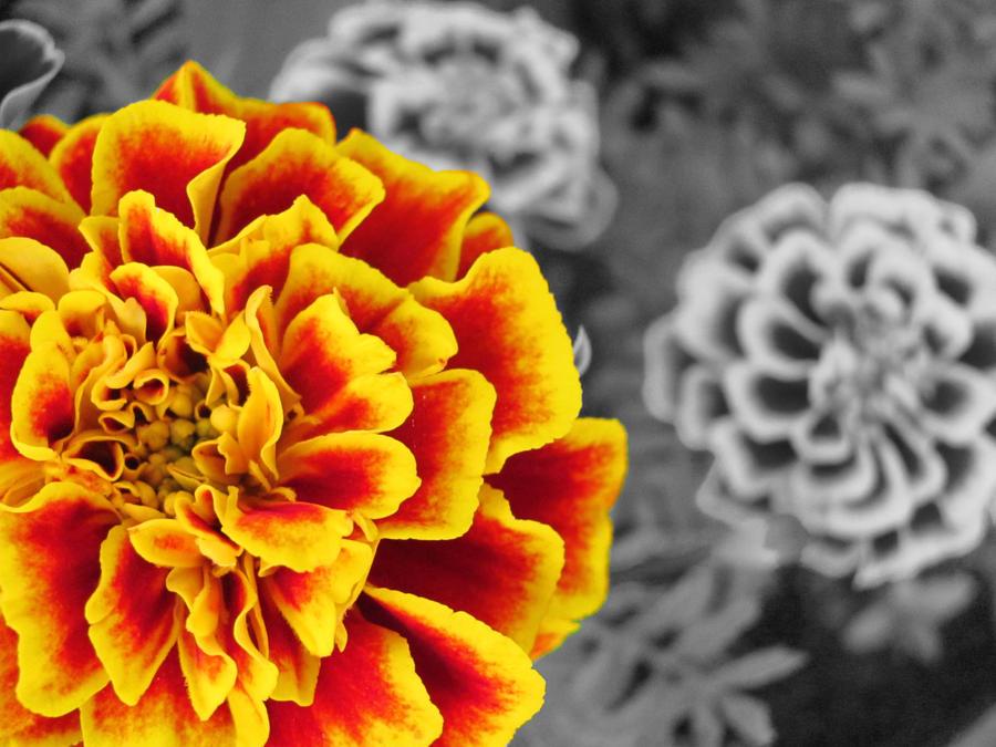 The Garden: Fire Partial Color by en-visioned