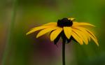 Like sunflower by Katari01