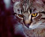 Cat. by Katari01