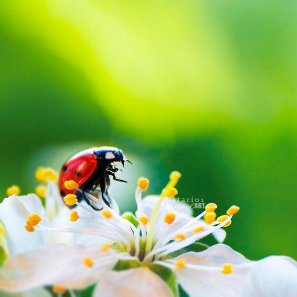 Ladybug. by Katari01