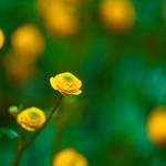 tiny rose by Katari01