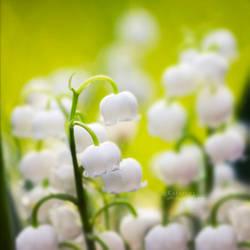 feel spring. by Katari01