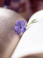 book of flowers. by Katari01