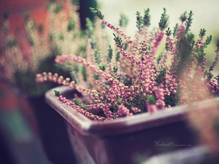 lovely autumn. by Katari01