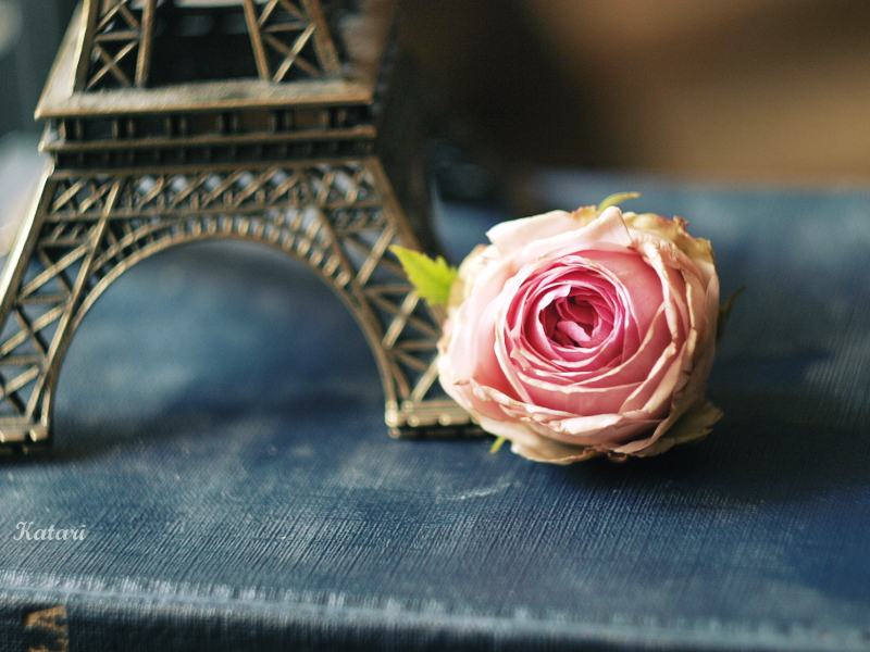 rose garden by Katari01