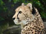 05.06.2012 - cheetah queen
