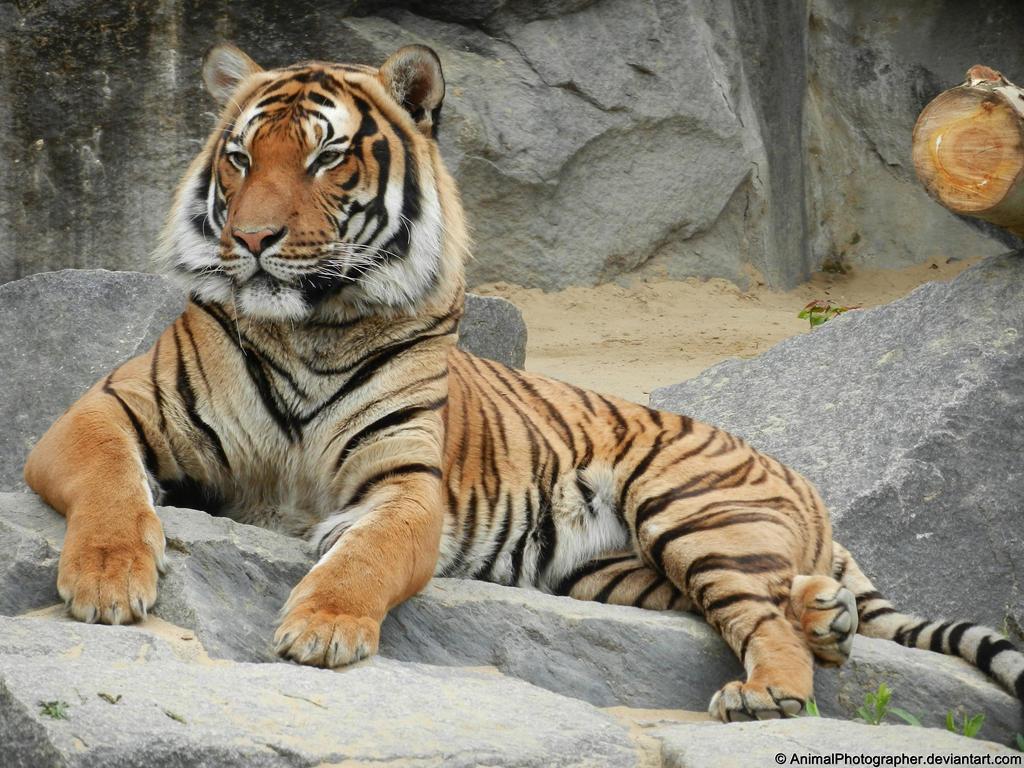 07.05.2012 - King Tarek by AnimalPhotographer