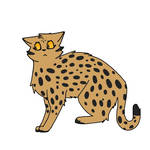 #6 Leopardstar
