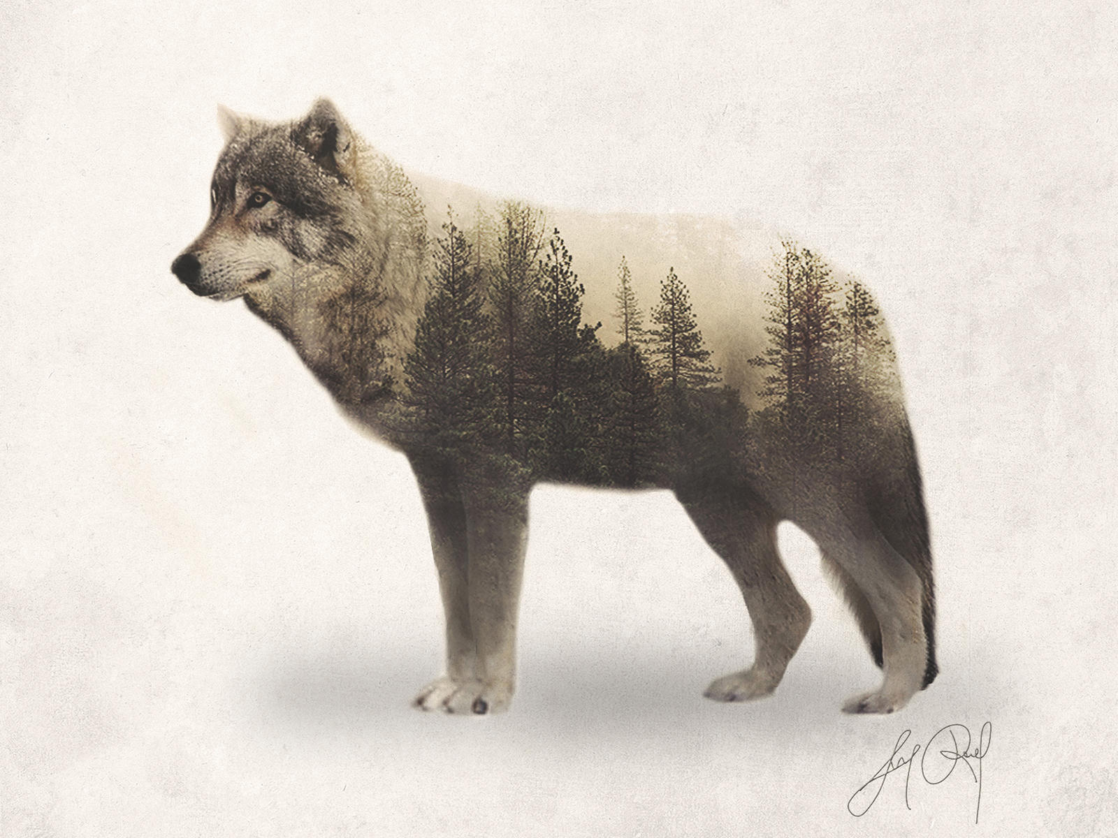Wolf (Double Exposure Animal Portraits) by lunaroveda on ...