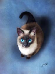 Siamese Cat (Digital Drawing) by lunaroveda