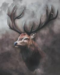 Deer (Digital Drawing) by lunaroveda