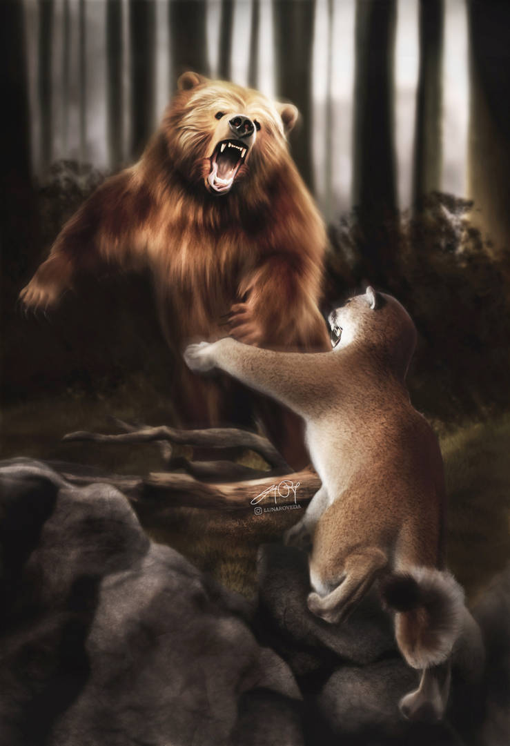 Grizzly vs Cougar (Digital Drawing) by lunaroveda