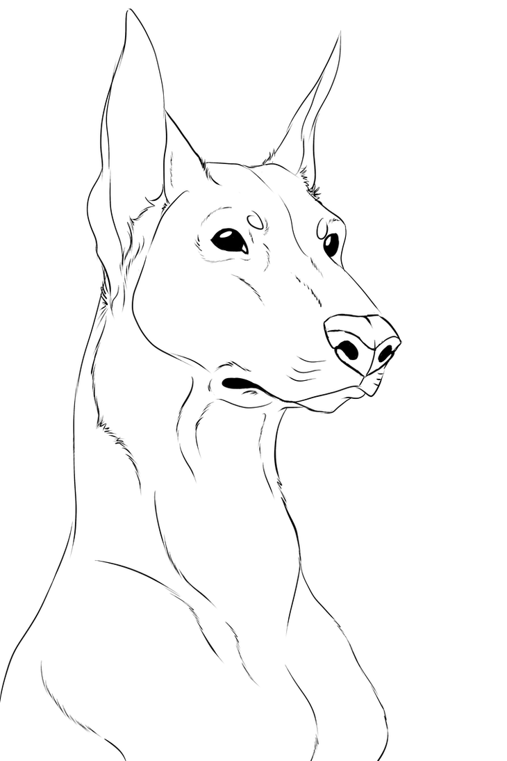 Doberman Lineart by SocialButter on DeviantArt