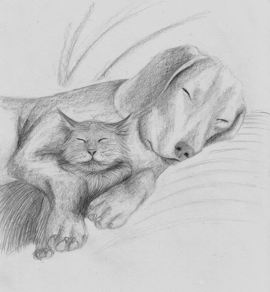 Dog and Cat Cuddle by xxUrs-Trulyxx - 184.0KB