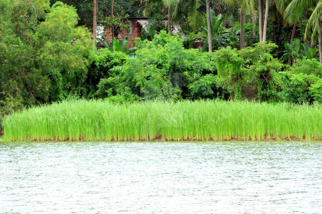 Kerala by Keralataxis