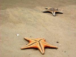 Dead Starfish by RegurgitatedFlesh