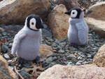Crochet emperor penguin chicks