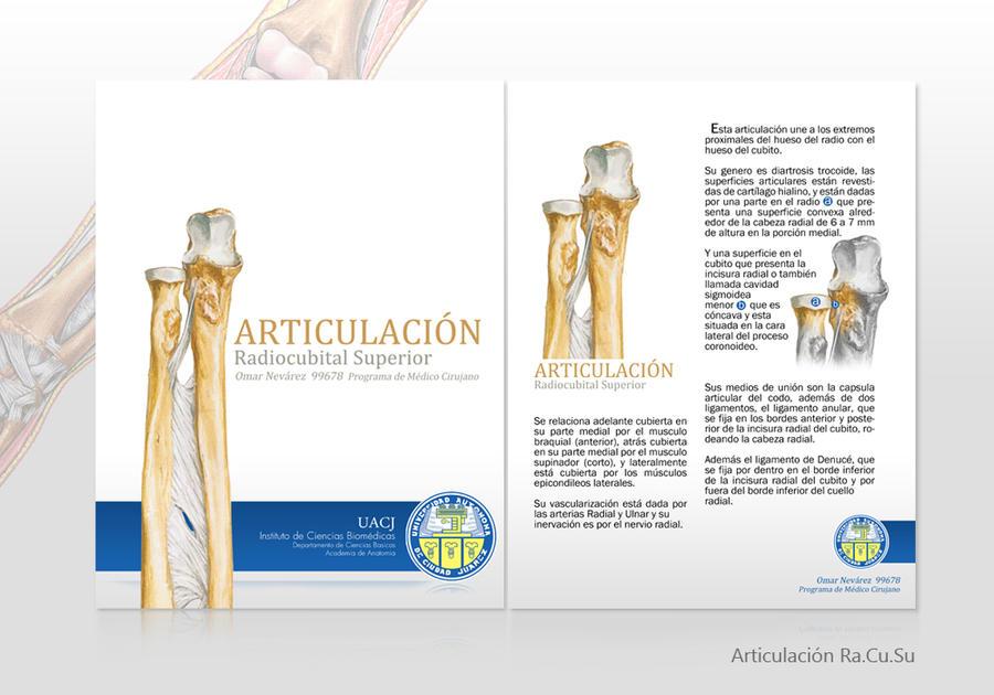 Articulacion Radiocubital by omarlinux