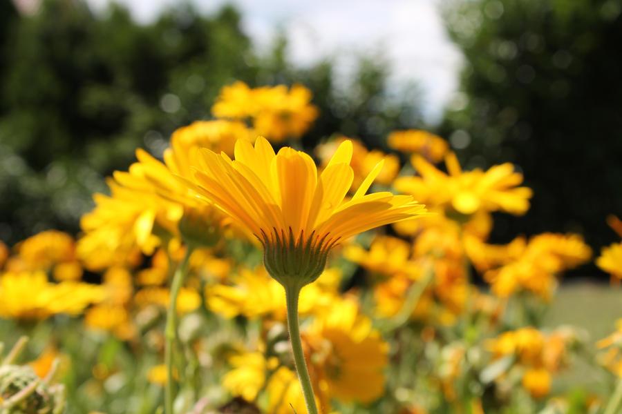Yellow by Wurmgelee