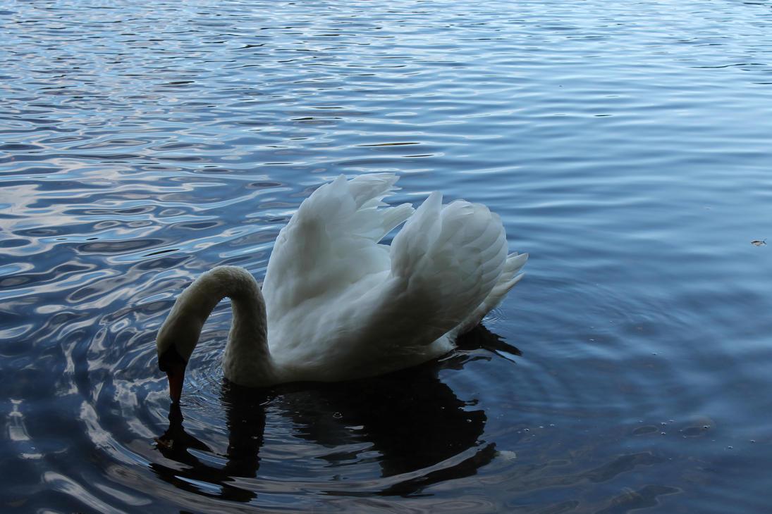 White Swan #3 by Wurmgelee