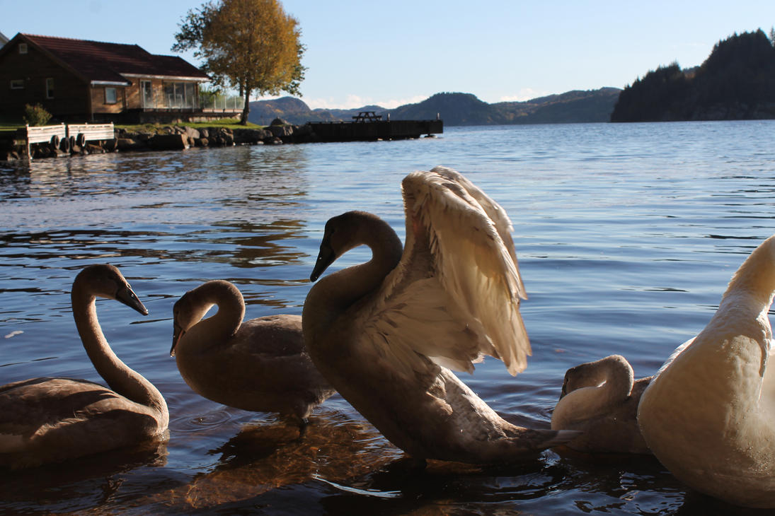 Baby Swans by Wurmgelee