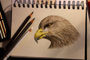 Eagle study by hermione-baggins