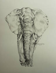 Elephant by hermione-baggins