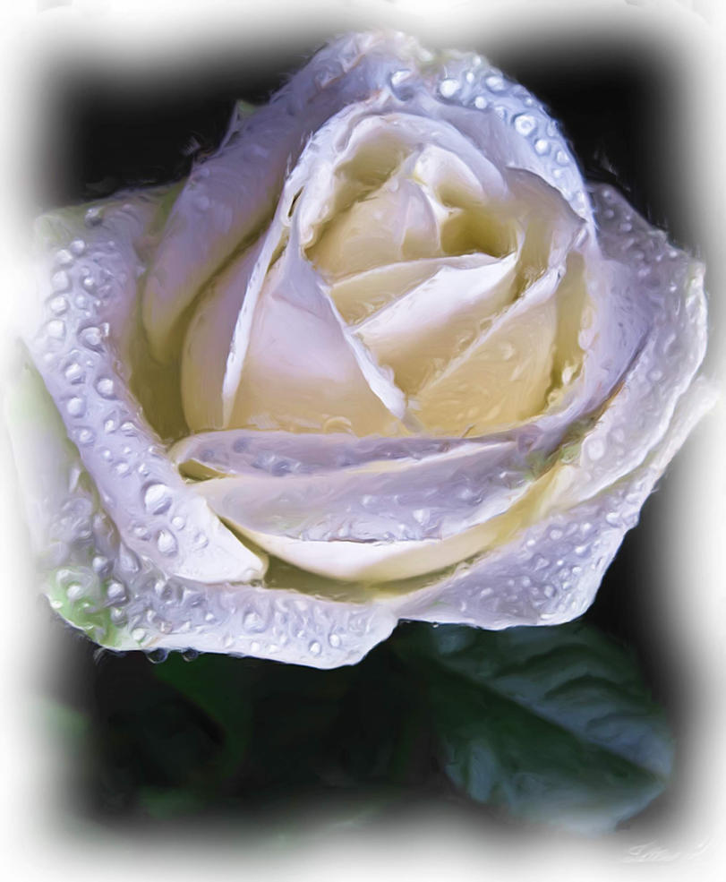The Rose by amy-WednesdaysChild