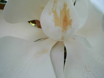 Magnolia Interior 2 by VanGargoyle