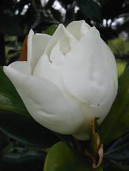 June Bloom by VanGargoyle