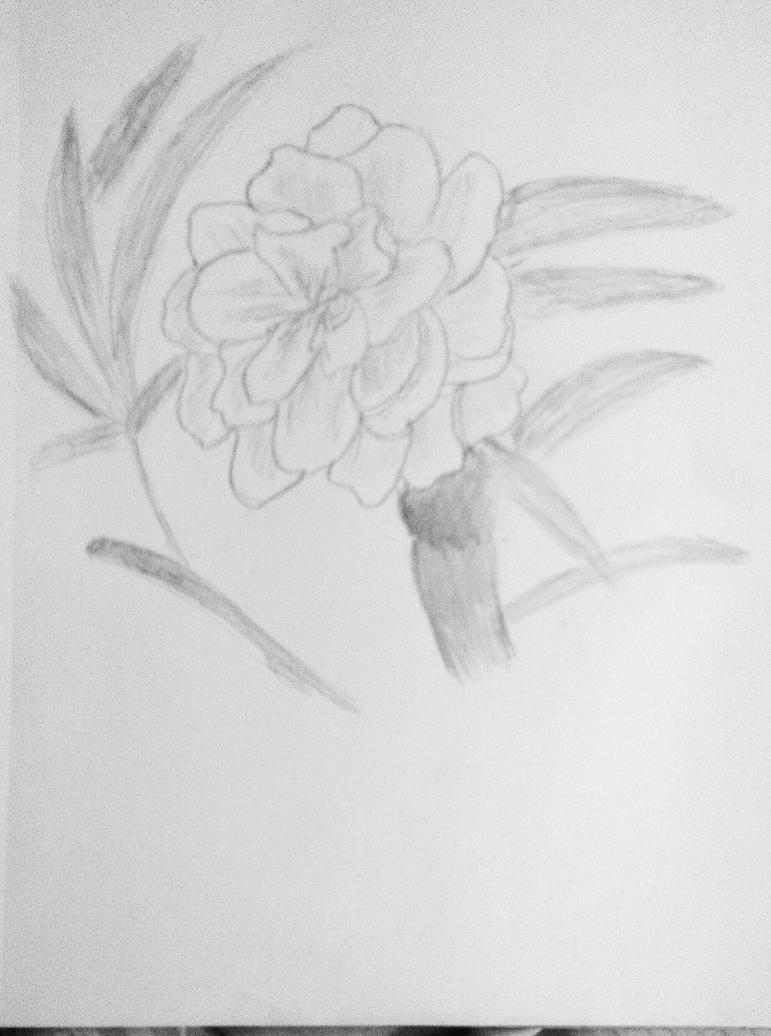 Peach Blossom by AceOfKeys72