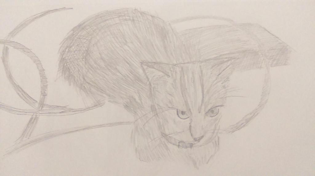 Our Cat, Meeko by AceOfKeys72