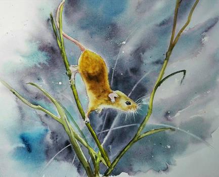 Badylarka/Harvest mouse