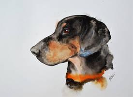Gonczy polski - dog by sezarka