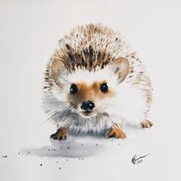Jez/Hedgehog