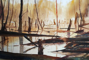 Sunrice of the swamp/Wschod slonca na mokladlach
