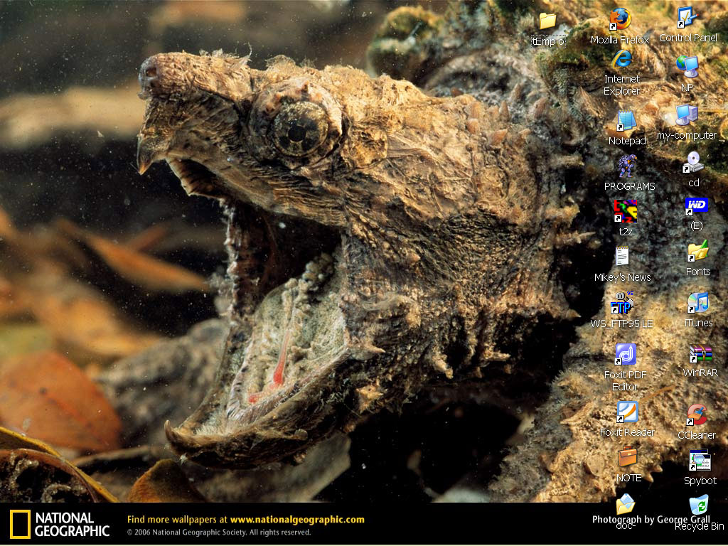N.G. Snapper Desktop 0408 by tOkKa