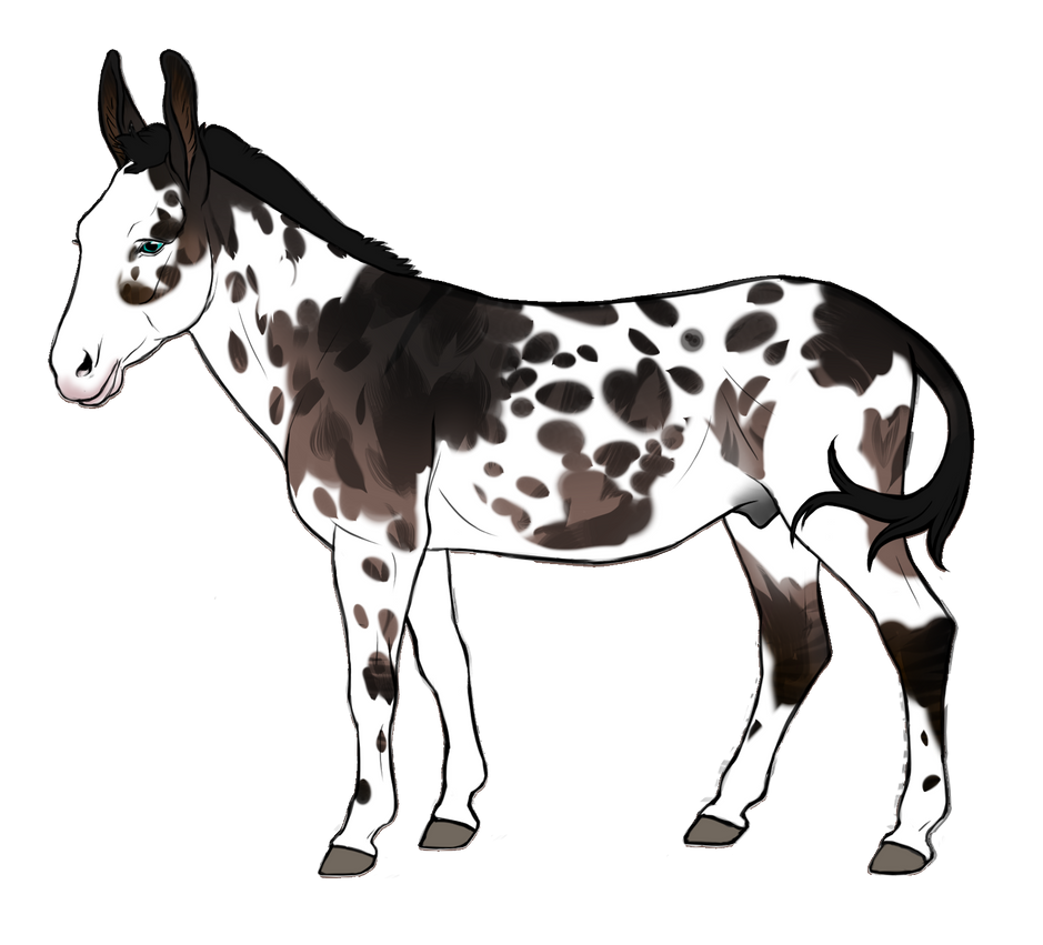 Drabardi Donkey