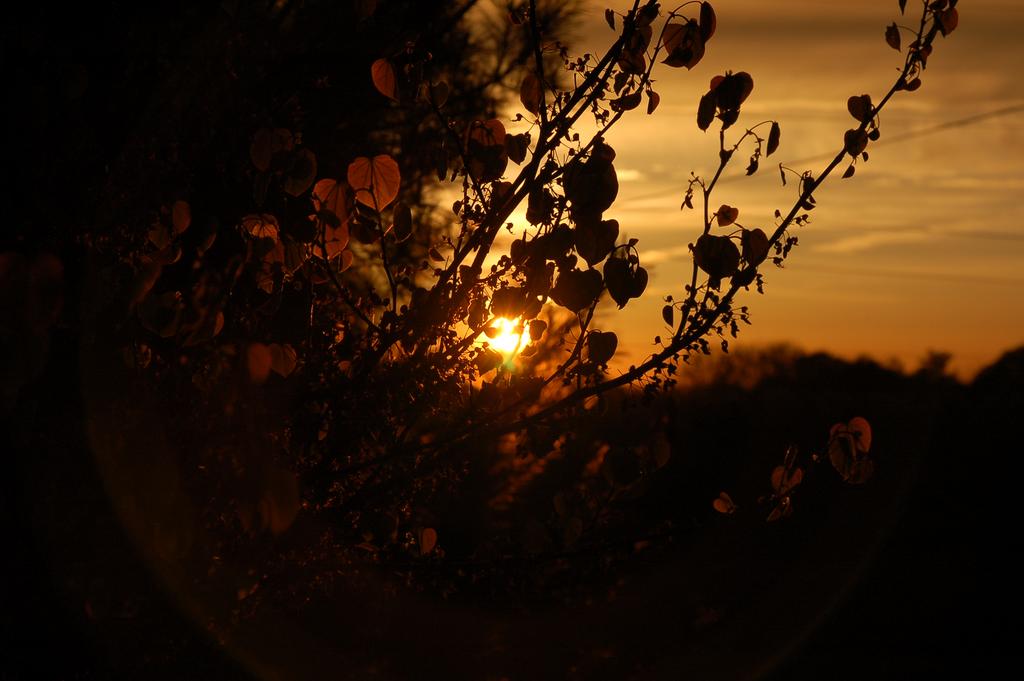 leafs shine by dcgamergirl