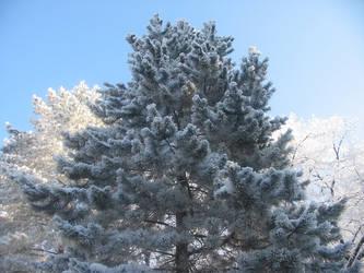 Trees in Winter 05 by Mickeye