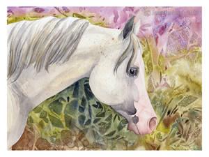 Gray - watercolor