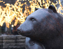 Bear In Park with lights