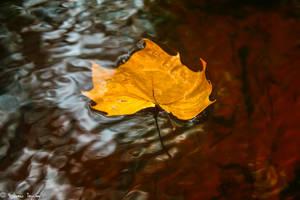 Autumns fall rivers gain