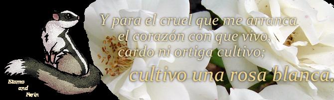 Cultivo Una Rosa Blanca by Etomo